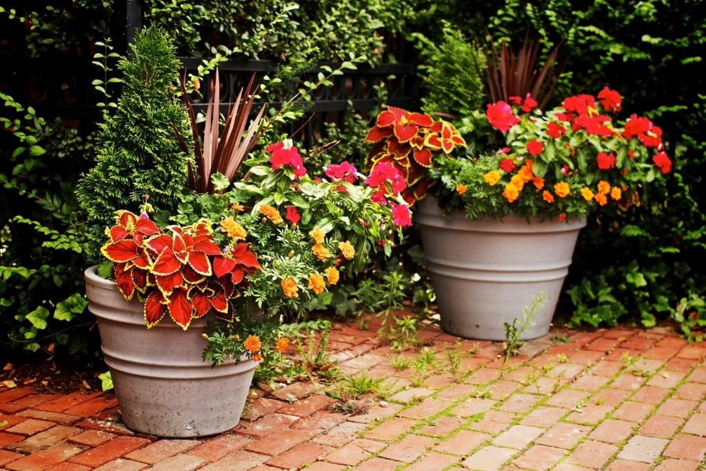 Container gardening for beginners container gardening tips - Container gardening basics ...