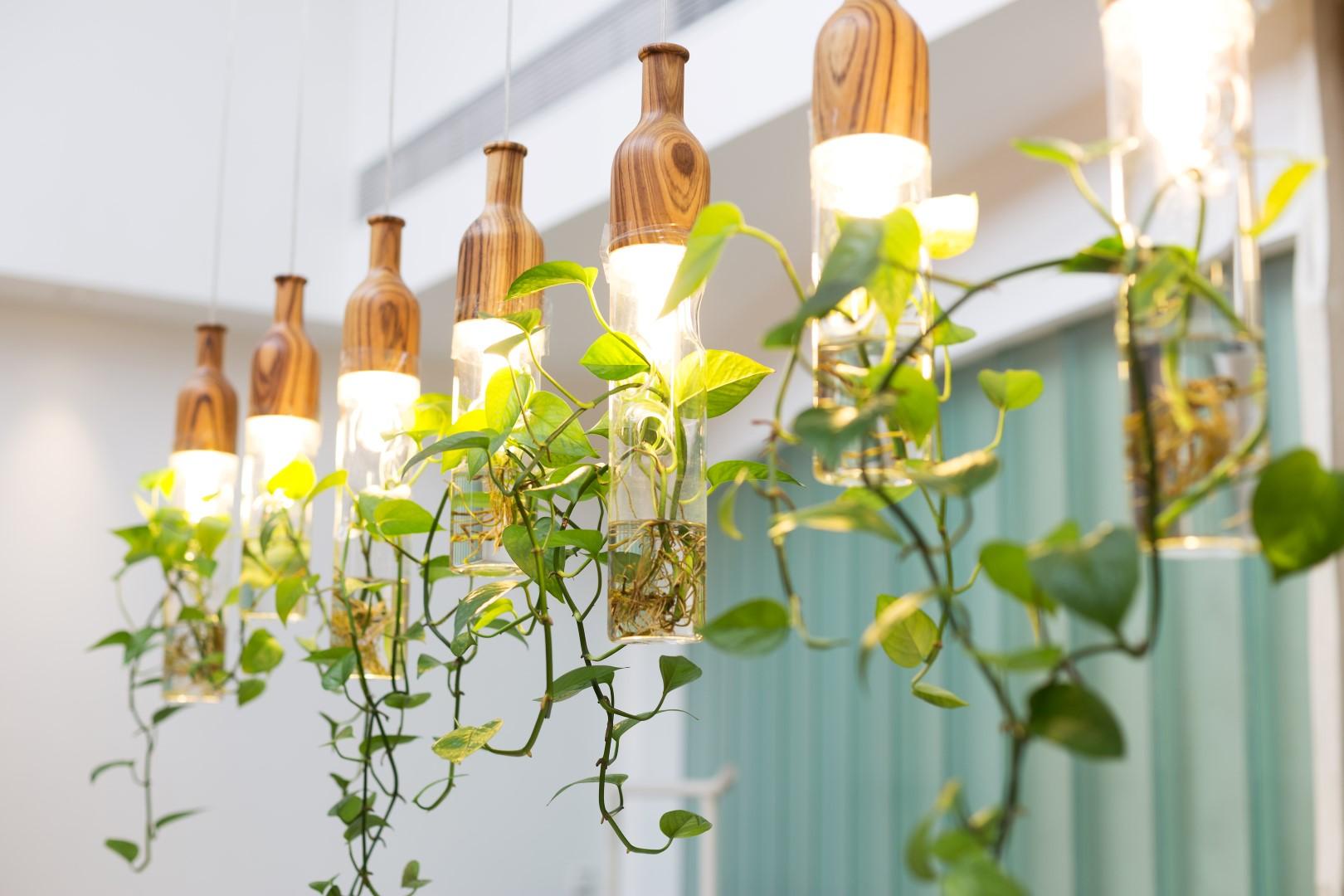 4 new trends for indoor vines trendspot inc. Black Bedroom Furniture Sets. Home Design Ideas