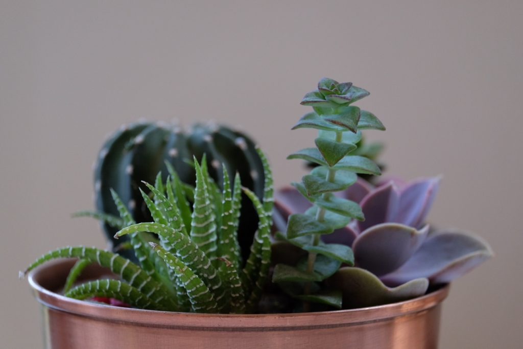 Succulent Bowls That Are Easy To Create And Maintain Trendspot Inc