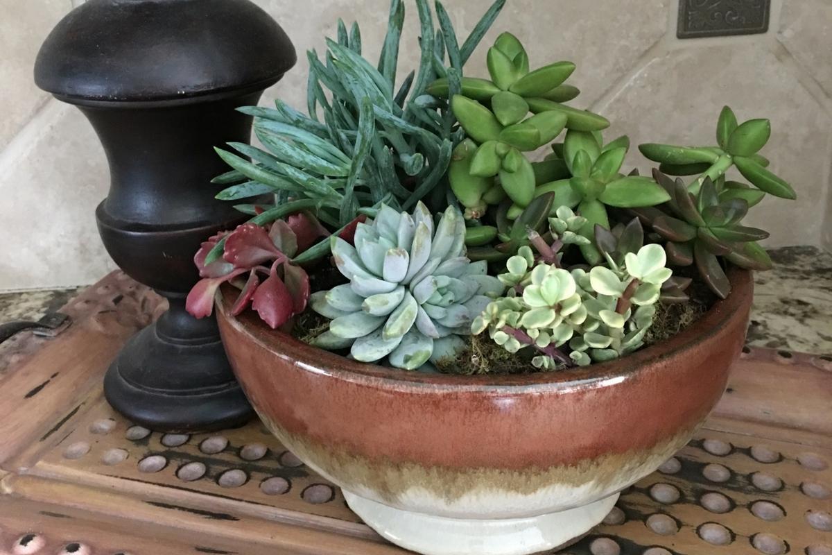 Succulent Bowl Ideas