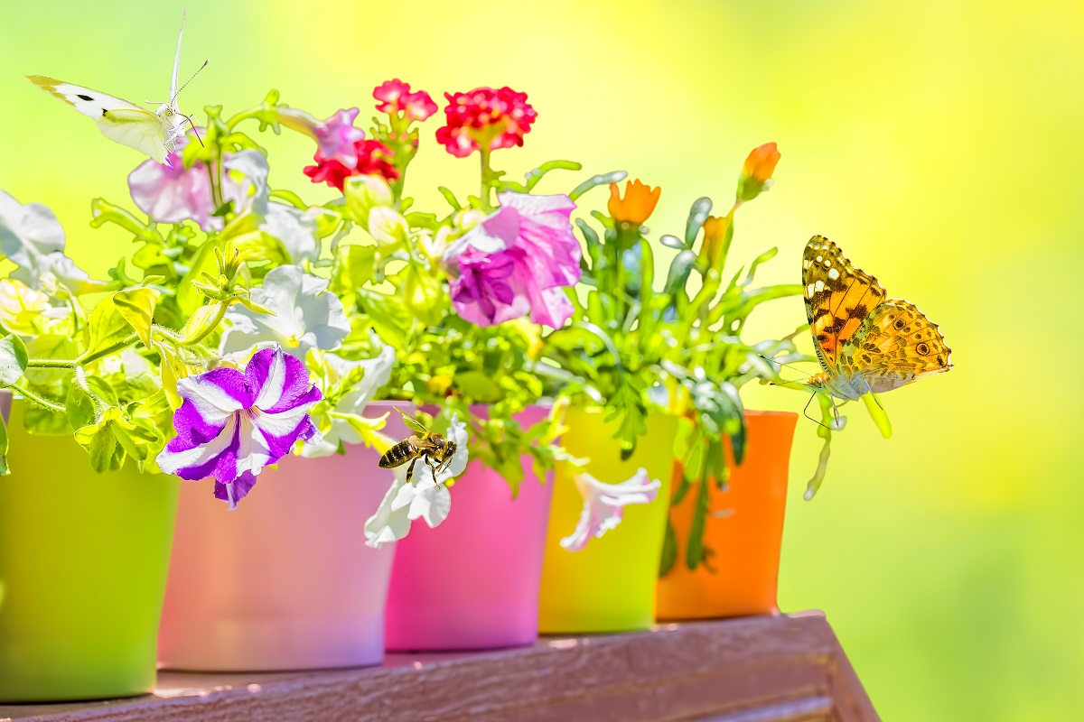 How to Make a Butterfly Container Garden
