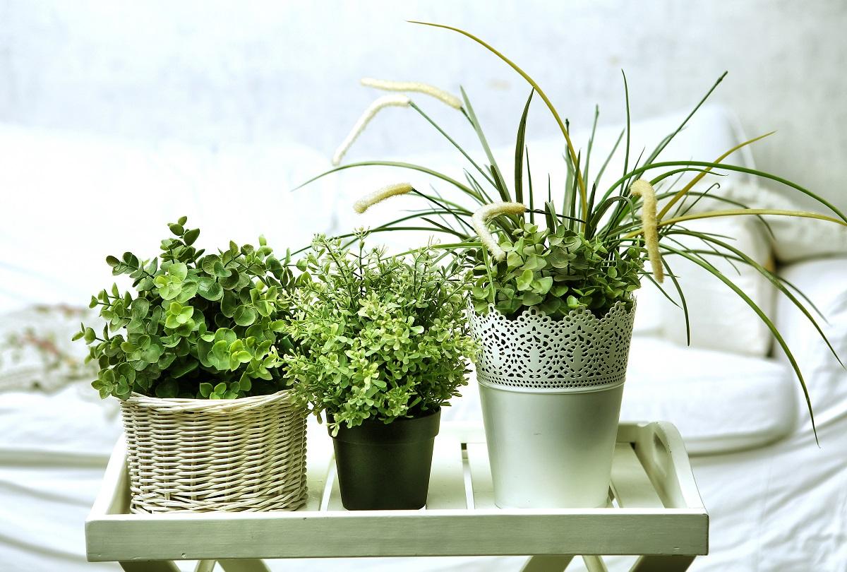 The Beginning Gardener's Guide to Indoor Fertilizer