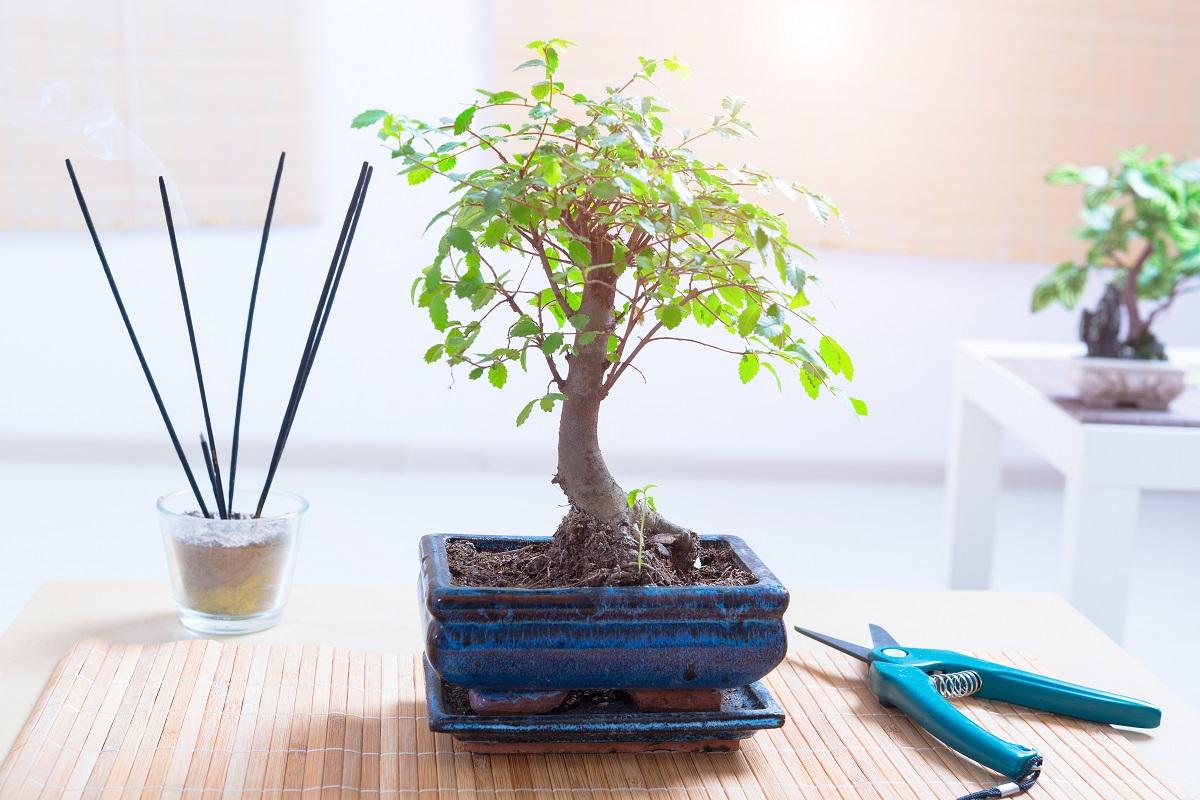 Trendy Plants Spotlight 2018 Bonsai Orchids And Zen